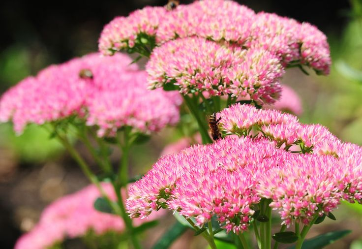 These Favorite Perennial Flowers will beautifully spruce up your garden and fill out difficult planting areas in your yard. Read to learn more.