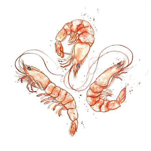 watercolour prawn - Google Search