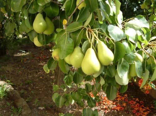 Calendario lunare delle semine di AGOSTO 2016 - Coltivare l'orto