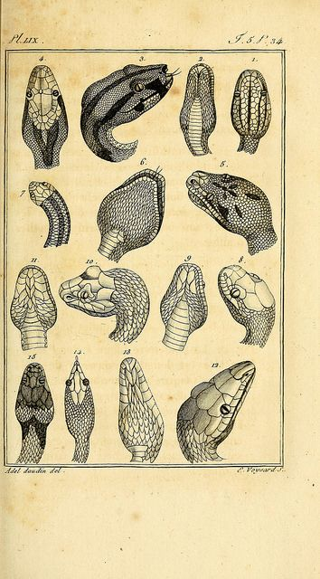 reptiles: structure following the general and particular natural history, made by Leclerc de Buffon, and written by CS Sonnini