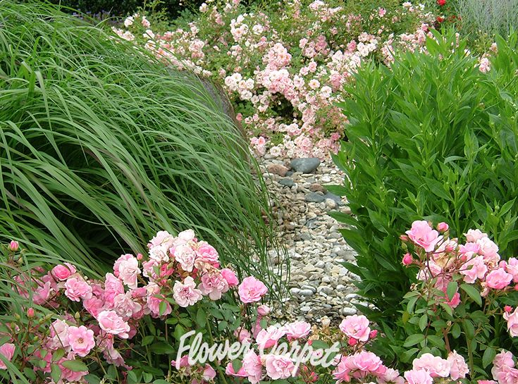 65 best garden designs with roses images on pinterest for Easy maintenance flower beds
