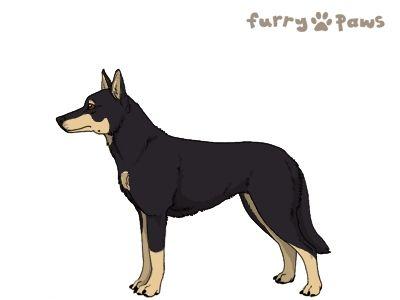 Furry Paws // WCT Kip's Jitterbug [1.588] 7.4 *BoB*'s Kennel