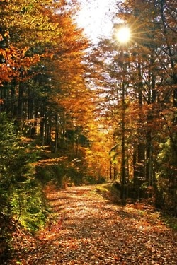 Fall leaves and wooded path