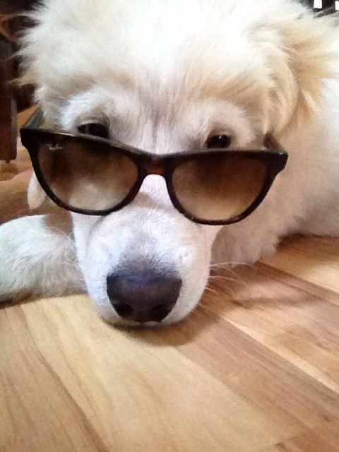 I'm a cool dogg!
