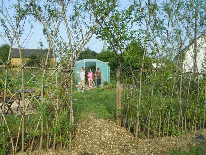 Living willow fedge. Gabrielle & Stuart Anderson's smallholding. Brittany