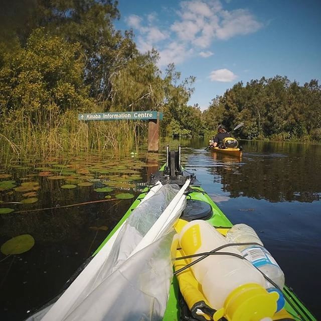 Taking a paddle through the Noosa Everglades! Best explored by canoe or kayak, the upper reaches of the Noosa River are an incredible sight, representing an unchanged, and ancient, waterway.