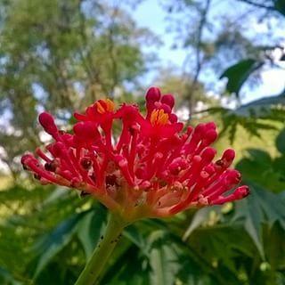 Parcela Mi Principió  #flor #flores #foto #photography