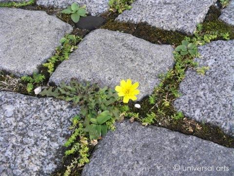 "Mario Strack - ""She said 1 - Cobblestone Flower"" | myartmap"