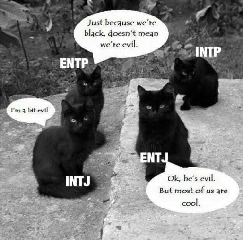 Rationalists: the black cats of the MBTI world (black cats aren't evil)                                                                                                                                                     More