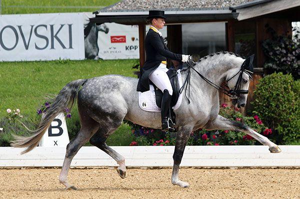 Isabell Werth and DSP Belantis, a sevem-year-old stallion in his first CDI at Schindlhof in Fritzeans, Austria. © 2016 Ken Braddick/dressage-news.com