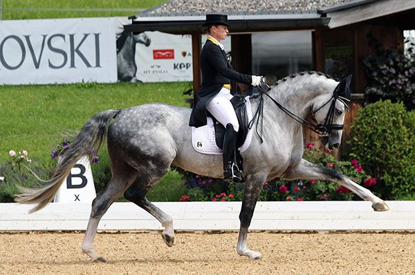 Isabell Werth and DSP Belantis, a sevem-year-old stallion in his first CDI at Schindlhof in Fritzeans, Austria. © 2016 Ken Braddick/dressage-news.com
