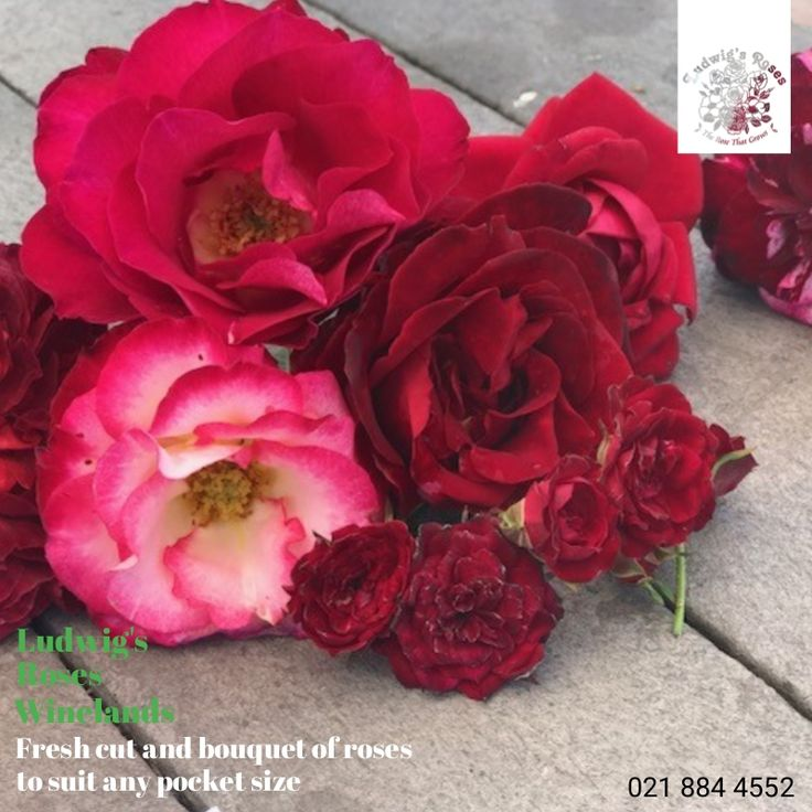 Fresh cut and bouquet of roses at LRW this Valentines Day.
