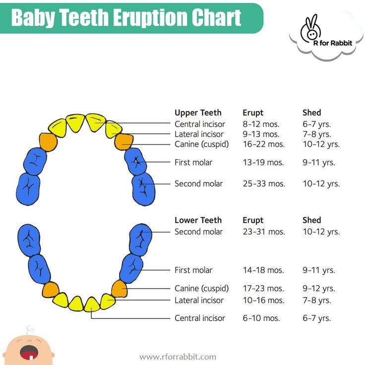 Baby teething chart teething chart baby teething chart