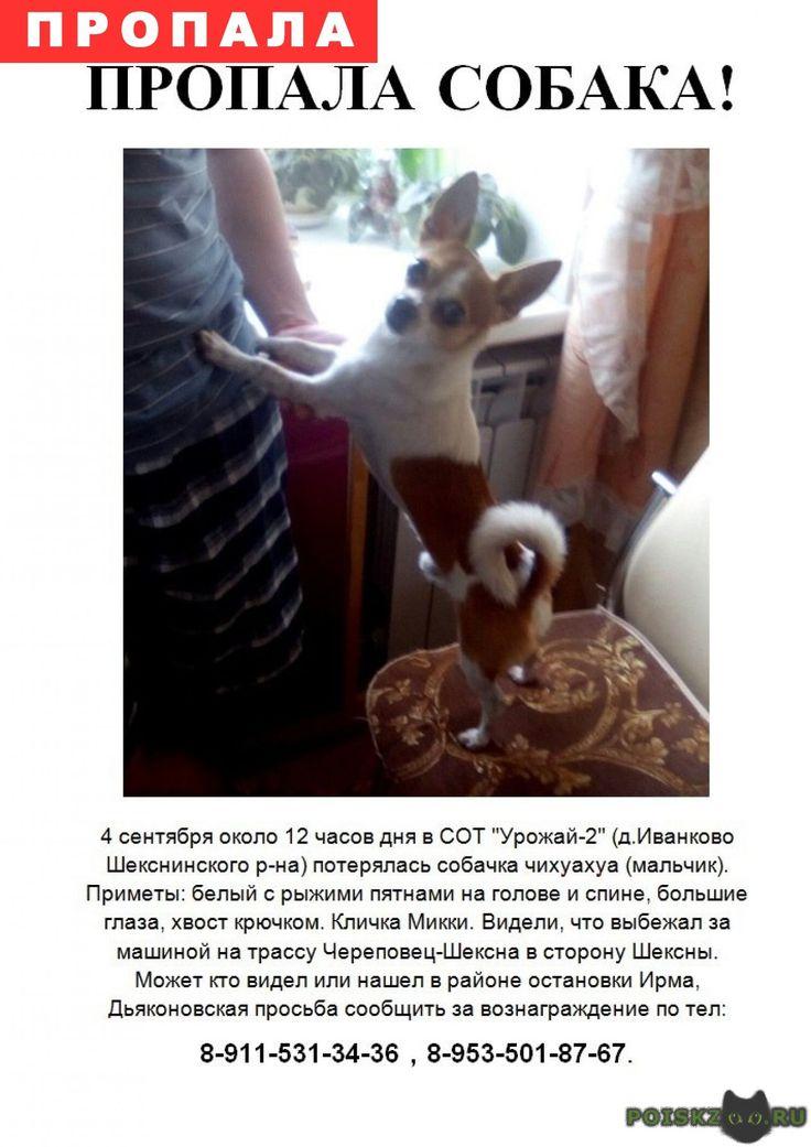 Пропала собака кобель г.Череповец http://poiskzoo.ru/board/read31479.html  POISKZOO.RU/31479 .. сентября .. года в Вологодской области на трассе Шексна -Череповец в районе остановки Дьяконовская пропала собачка чихуахуа(возможно была сбита). У собачки больной желудок, ему постоянно нужны дорогостоящие лекарства. Собачка самый важный член семьи. Без нее и жизнь не жизнь. Помогите найти! Важна любая информация. Вернувшим хорошее вознаграждение!   РЕПОСТ! @POISKZOO2 #POISKZOO.RU #Пропала…