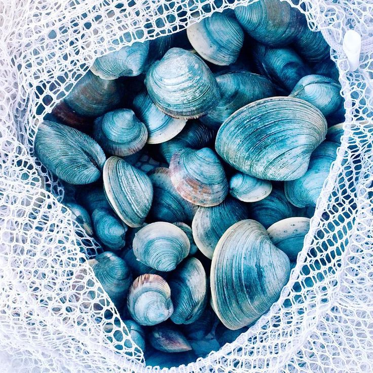 Free your Wild :: Ocean Bounty :: Shells :: Sea glass :: See more natural treasures @untamedorganica