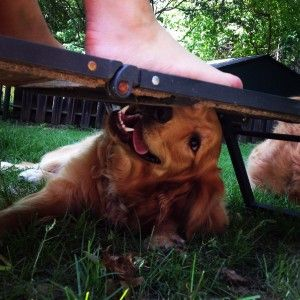 Puppy School, Dog Training, Golden Retriever Puppy, MyDogLikes