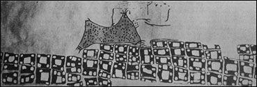 possibile interpretazione della Iscrizione a muro di Catal-Hyuk. Si confronti con la foto del sito in questa bacheca.