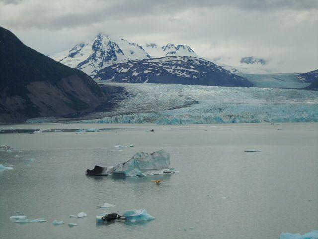 Alaska – Natur pur auf Land und Meer: Alaska hat mich mit seinen unendlichen Flächen, Natur pur und der artenreichen Tierwelt enorm beeindruckt.