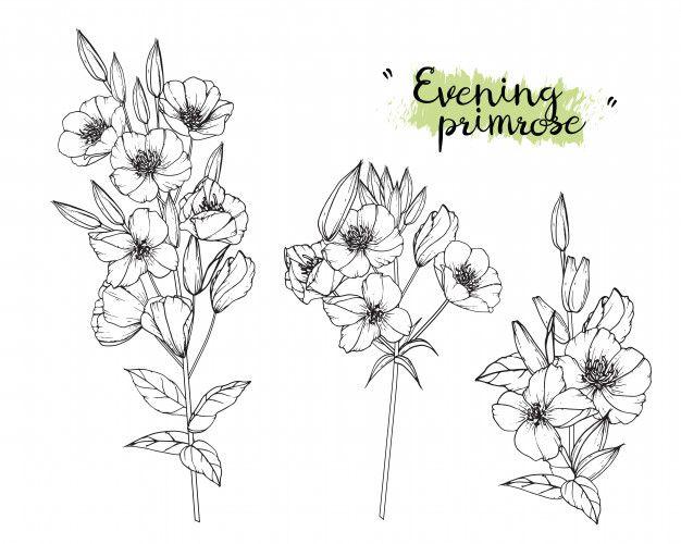 Evening Primrose Leaf And Flower Drawing Premium Vector Freepik Vector Background Flower Vi In 2020 Violet Flower Tattoos Line Drawing Tattoos Flower Drawing