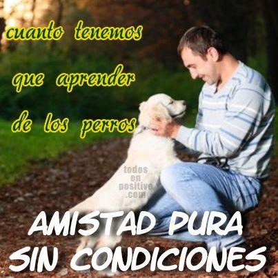 Amistad pura sin condiciones...Cuanto tenemos que aprender de los perros