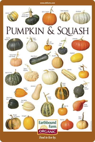 Pumpkin & Squash Identification Chart from Earthbound Farm in Carmel Valley, CA