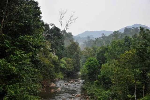 Gambar Dan Foto Hutan Hujan Tropis Kumpulan Gambar Hutan Hujan Tropis Alamendah S Blog Pengertian Ciri Ciri Serta Fungsi Dan Hutan Hujan Gambar Hutan Gambar