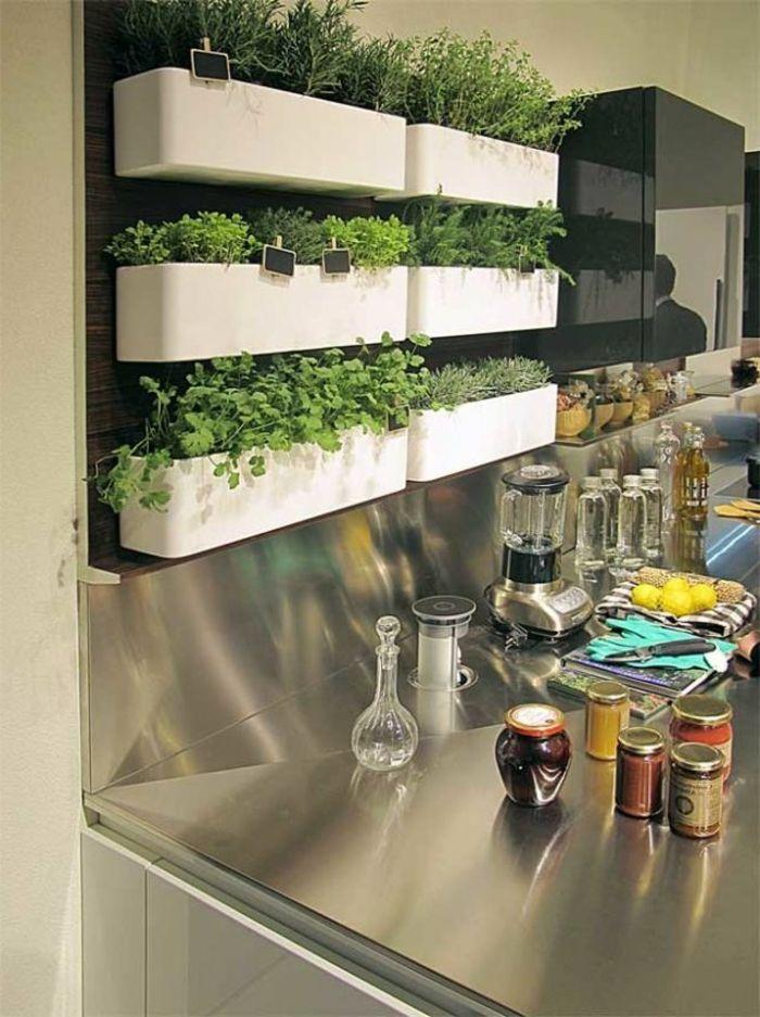 grüne wandfarbe - pflanzen an der wand in der küche