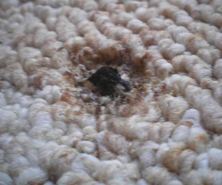 17 Best Images About Carpet Tips On Stains And Repair On