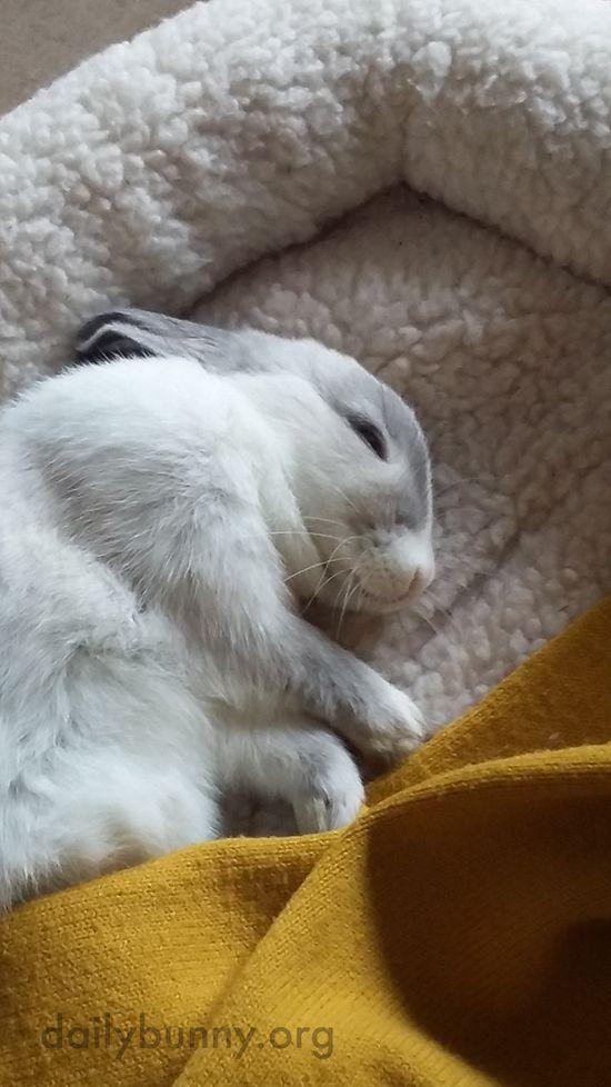 25 best ideas about dwarf bunnies on pinterest