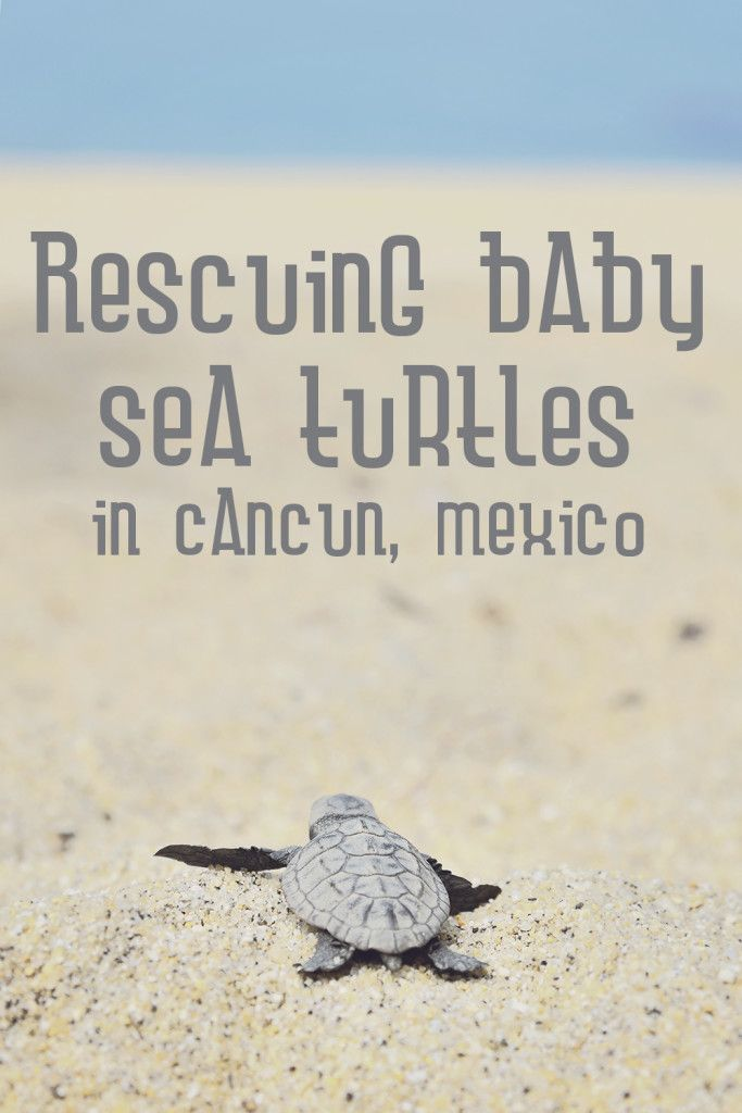 Rescuing Baby Sea Turtles: Photo ©KeiMuratagawa via Flickr creative commons