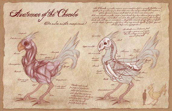 Anatomy of the Chocobo- Giclee Art Print- Game Art- Geeky Home Decor- Final Fantasy Poster