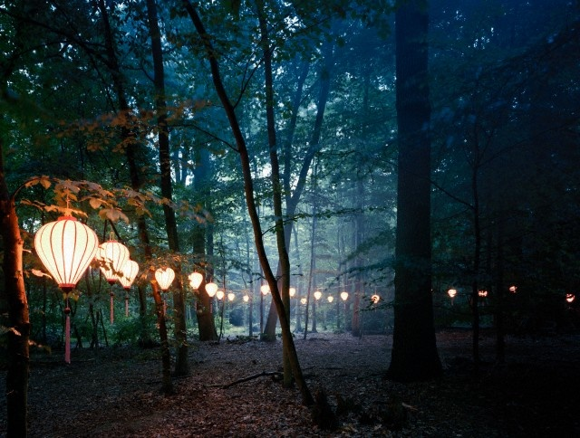 Hanging lights in forest