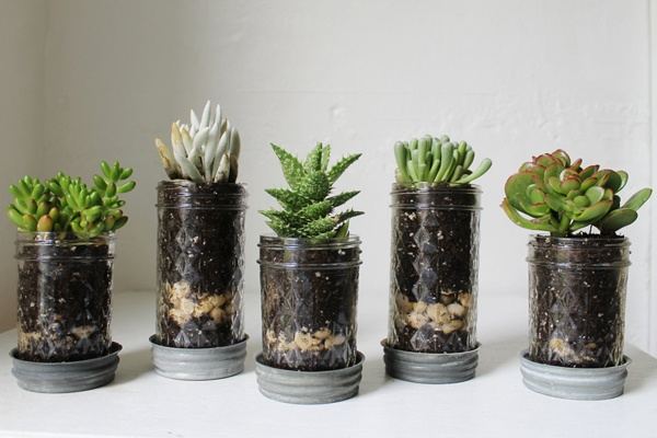 mason jar planter: Jars Idea, Recycled Jars, Diy'S, Succulent Gardens, Plants, Mason Jars, Jelly Jars, Masons Jars Planters, Jars Succulents