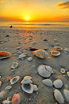 Marco #Island, #Florida, USA
