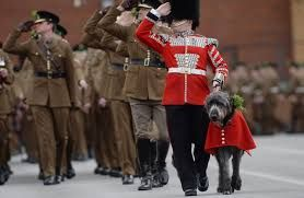 Image result for images of st. patrick's day parade irish wolfhounds