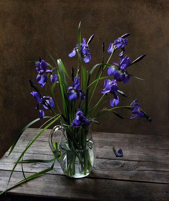 Картинки ирисы в вазе цветы