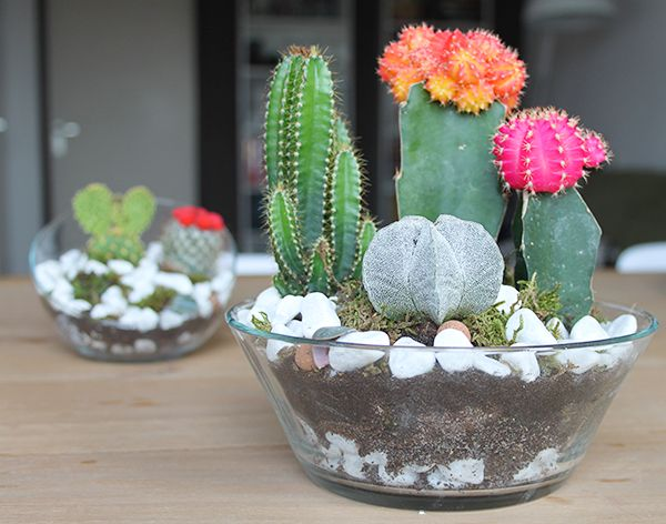 The Dainty Dream, By Mandy Fisher: DIY: Mini Succulent And Cacti Garden