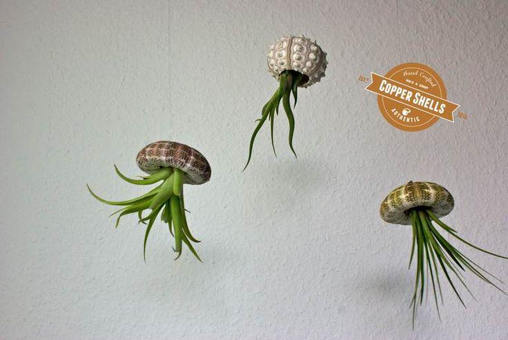 25 best ideas about pflegeleichte pflanzen on pinterest pflegeleichte balkonpflanzen. Black Bedroom Furniture Sets. Home Design Ideas