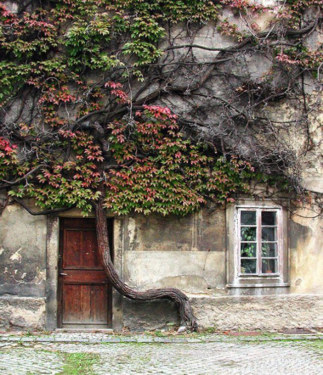 Prague. Omg why don't I live inside that door??!?