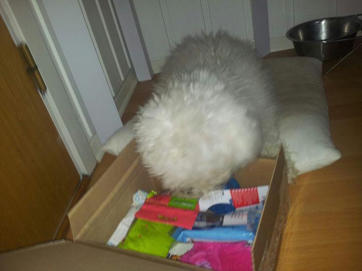 Vanilla - DoggieBag.no #DoggieBag #Hund