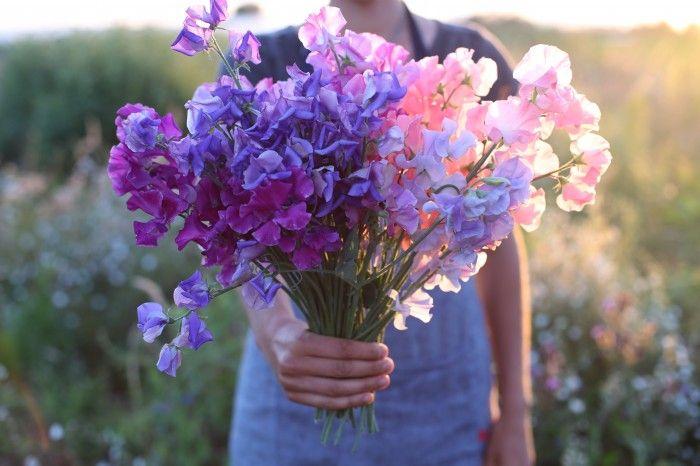 Bliss - a bouquet of sweet peas!
