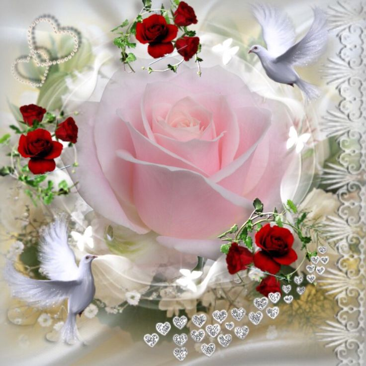 via imikimi: http://imikimi.com/api/v2/itunes_store/app/342563837  this frame: kimi://imikimi.com/kimis/E0Cc-2bA-3