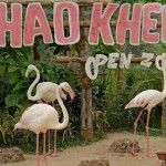 NEW STAR AT KHAO KHEOW OPEN ZOO