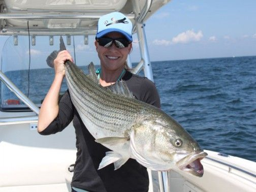 17 best images about striped bass pics on pinterest for Striped bass fishing tips