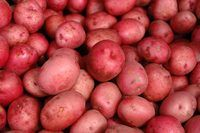 How to Grow Baby Red Potatoes | eHow