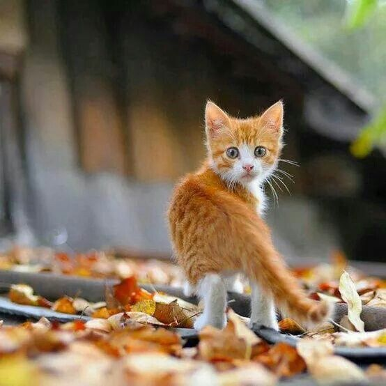 I think those leaves are AFTER me!