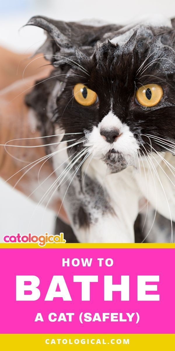 How To Bathe Your Cat Best Conditioning Shampoo Ratings Reviews Cat Care Cat Shampoo Cats