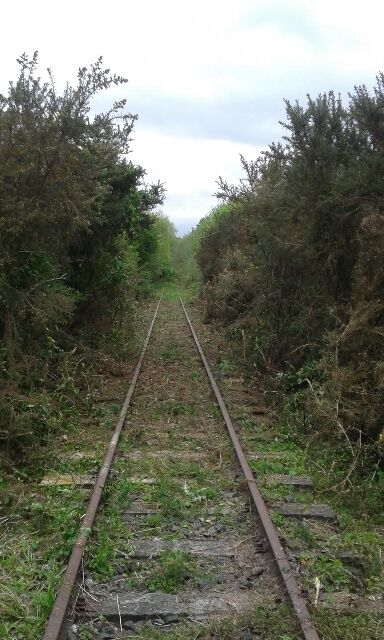 The track is finally cleared at Awakeri Rail Adventues in preparation for the passengers experiencing the famous Taneatua Rail Line from the comfort of their own self driven rail vehicles in Whakatene in New Zealand.