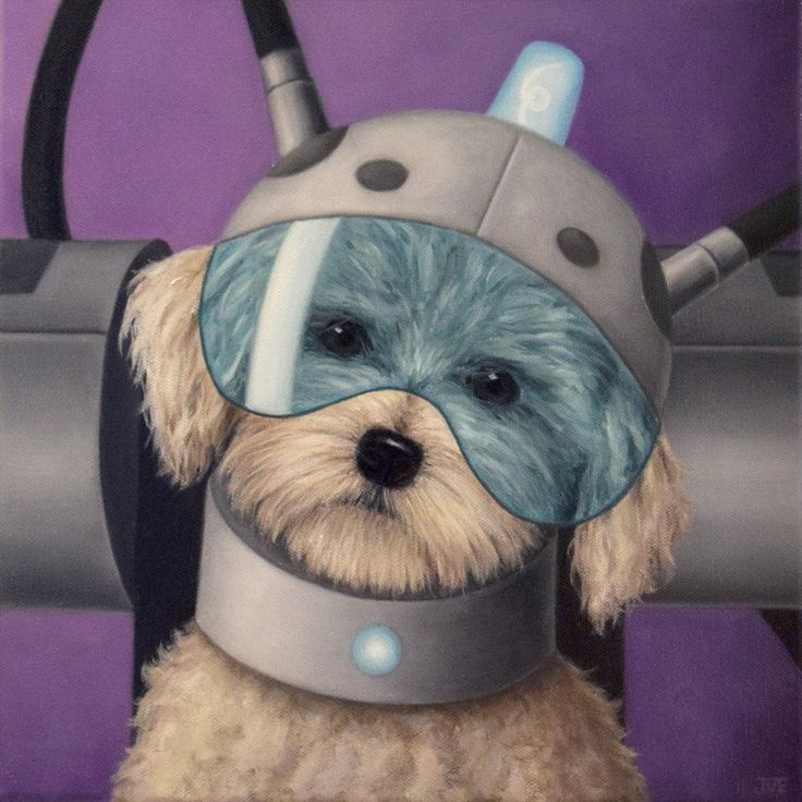 Summer where Are My Testicles snowball dog