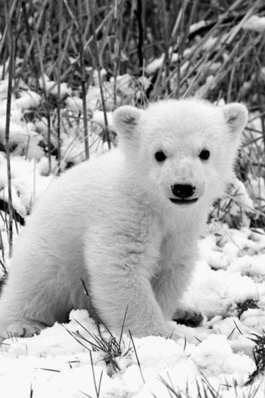Polar Baby~
